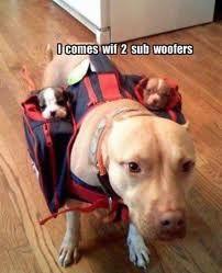 LOL Sub woofers!