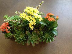 Beautiful succulents by la petite fleur, Glendora Petite Fleurs, Floral, Succulents, Plants