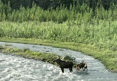 Denali Backcountry Adventure - The Beckham Project Alaska National Parks, Panning For Gold, Visit Alaska, Norwegian Cruise Line, Adventure Tours, Disney Cruise Line, Group Tours, Royal Caribbean, Beckham