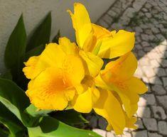 Divagar entre FLORES - ANIMAIS - NATUREZA: Flores em Amarelo Plants, Blog, Yellow, Nature, Garden, Animals, Flowers, Blogging, Plant