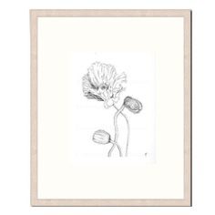 "ORIGINAL - HAND DRAWN - Black, White Ink Drawing, Flower Art, ""Poppy Study 29"". Poppy Pods, Black and White Drawing, Botanical Art by KylieFogartyFineArt on Etsy https://www.etsy.com/au/listing/223056981/original-hand-drawn-black-white-ink"
