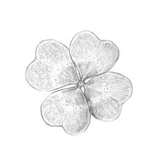 Adding the hatching with a softer pencil Four Leaf Clover Drawing, Pencil Drawings Of Nature, Bow Drawing, Leaves Sketch, Tumblr Sketches, Drawing Ideas List, Skeleton Dance, Beautiful Symbols, Best Pencil
