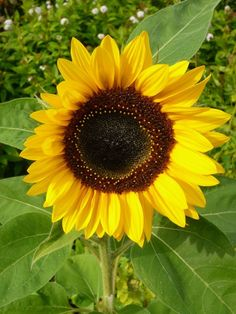 sunflower This color for the front door