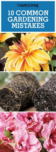 Don't forget to save these helpful garden tips. For more outdoor ideas, follow…
