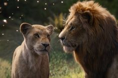 Disney's 2019 live-action remake of 'The Lion King' with Beyoncé, Donald Glover, Seth Rogen and John Oliver smashed records at the box office. Le Roi Lion 1, Le Roi Lion Film, Le Roi Lion Disney, Walt Disney, Disney Live, Disney Travel, Lion King Remake, The Lion King, Lion King Movie