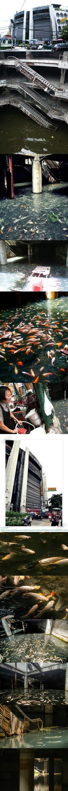 [METRO KOI] Thousand of fish in an abandoned mall building.