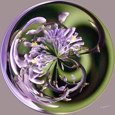 Amazing Circle - Lavender.  Copyright Nancy Kirkpatrick Photography