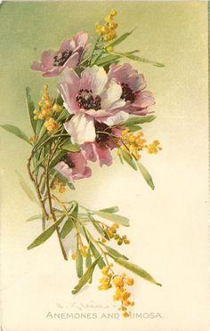 Коллекция картинок: Антикварные открытки от Cathеrine Klein.Цветы 1