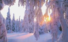 Winter.Beautiful pictures