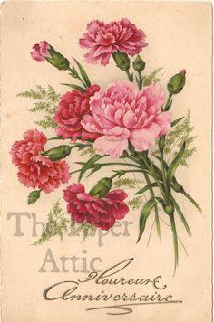 Pink Carnations Antique Vintage French Chromo Postcard picclick.com
