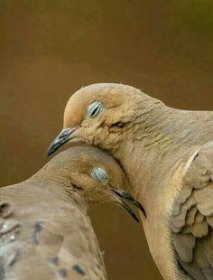 L'amour... ...