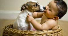 H παρέα του Επταπυργίου : Ποιες ασθένειες μεταδίδονται από τα ζώα στον άνθρω...