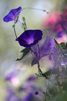 Volubilis | Flickr - Photo Sharing!