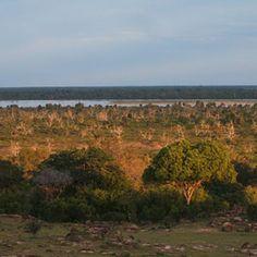 Experience Pure Wildlife Beauty Of Tanzania Safari Serengeti National Park, Tanzania Safari, Game Reserve, African Safari, Travel Around, National Parks, Bucket, Island, Outdoor