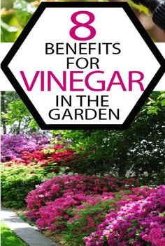 Chances are, you've heard of vinegar being the miracle cure for about a billion gardening woes. Learn what DOESN'T really work and what DOES with these 8 benefits of vinegar in your garden.