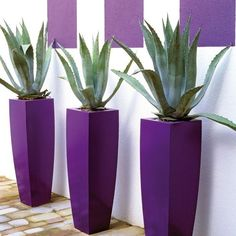 This terrace walkway gets a stunning focal point from repetition of form. The purple planters and painted squares against a white wall enhance the green agave. Container Plants, Container Gardening, Pot Jardin, Deco Floral, Flower Pots, Flowers, All Things Purple, Front Yard Landscaping, Landscaping Ideas