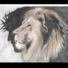 Jesus the lion of the tribe of Judah