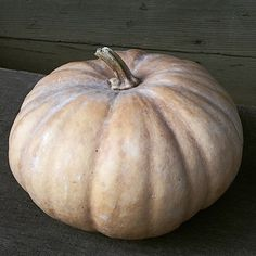 """This Long Island heirloom was known as the original """"Cheese Wheel"""".  It has smooth, heavily ribbed, buff-colored skin with a deep orange, sweet flesh.  This winter squash weighs 6-10 pounds, and is considered one of the best baking varieties and is excellent in pies. It also stores well.  Approximately 16 Long Island Cheese Winter Squash seeds per packet. Squash Seeds, Seed Bank, Cool Store, Long Island, 10 Pounds, Pumpkin, Cheese, Vegetables, Smooth"""