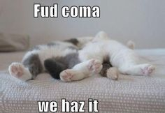 First World Cat Problems - Album on Imgur