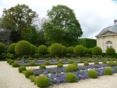 Topiaires, parterres de myosotis, pensées et tulipes, jardin formel devant l'Orangerie du Parc de Sceaux, Hauts-de-Seine, 21 avril 2012, photo Alain Delavie