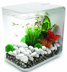 Retail manager gardening magazines and medal displays on for What do you need for a fish tank