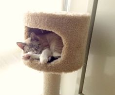 Home, Sweet Home: How to Bring an Outside Cat Indoors : The Humane Society of the United States