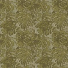 Cassolo Olive Green wallpaper by Carlucci di Chivasso Olive Green Wallpaper, Cheese Plant, Jungle Print, Wall Colors, Textures Patterns, True Colors, Color Schemes, Phone Wallpapers, Dorm Room