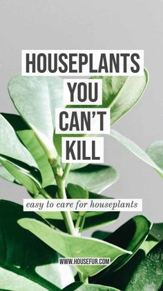 Houseplants You Can't Kill. Low Light houseplants that are easy to care for and virtually un-killable. Flowers Perennials, Planting Flowers, Planting Plants, Low Light Plants, House Plant Care, Herbs Indoors, How To Grow Taller, Garden Spaces, Gardening For Beginners
