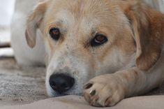 Κτηνωδία στη Μυτιλήνη: Κακοποίησε τον σκύλο του και ανήλικο αγόρι που προσπάθησε να βοηθήσει το ζώο