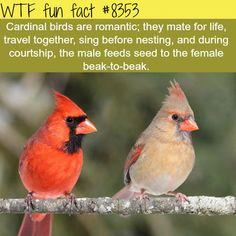 WTF Fun Facts is updated daily with interesting & funny random facts. We post about health, celebs/people, places, animals, history information and much more. New facts all day - every day! Wtf Fun Facts, Funny Facts, Random Facts, Strange Facts, Beautiful Birds, Animals Beautiful, Spring Decoration, Backyard Birds, The More You Know