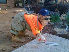 Dog worker