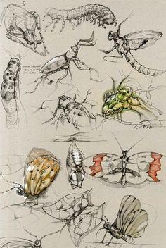 Sketches by Della Tosin, via Behance.