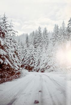 Snow covered winter fir forest at Snoqualmie pass. I Love Winter, Winter Snow, Winter Christmas, Prim Christmas, Snow Scenes, Winter Scenes, Winter Magic, Winter Pictures, Winter Beauty