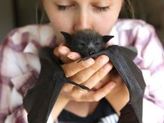 An orphaned flying fox bat being looked after at a Sydney sanctuary. (Photo: Supplied/Landcare Australia)