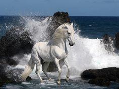 Cand sari de bucurie, atentie ca nimeni sa nu-ti ia pamantul de sub picioare | Poze cu cai frumosi