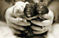{puppies!!}