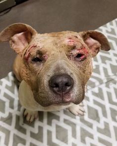 HUNG BY FEETWTF... Dog fighters hung this puppy BY HER FEET ... What they did next is unfathomable. Read more : http://dogco.org/save-gkdr-fbPosted by Hendrick & Co. on Friday, December 30, 20167-month-old Hope was used as a bait dog. Her abusers hung her upside down so she couldn't fight back.