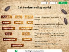 Key vocabulary task for Evolution & Inheritance Y6