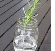 Home-Dzine - How to propogate rosemary lavender