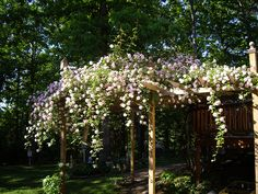 We have an arched arbor that goes over a gate leading into the lambs pen. I have always wanted to grow climbing roses over the arbor and dec. Pergola Swing, Pergola Shade, Pergola Patio, Pergola Ideas, Outdoor Ideas, Backyard Ideas, Gazebo, Outdoor Rooms, Outdoor Gardens