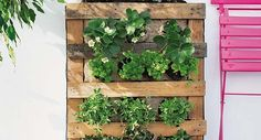 DIY-pallet-vertical-garden-strawberries-herbs-balcony-terrace-600x325