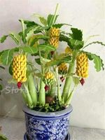 200 шт. мини банан семена Бонсаи дерево открытых многолетних интересные растения вкус молока вкусные фрукты семена для Для дома и сада
