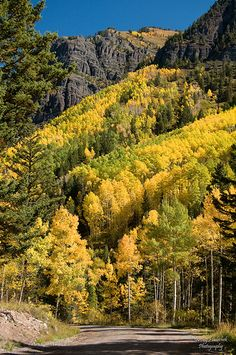 Colorado Fall Color.