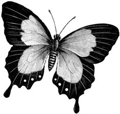 butterfly art drawings | Butterfly | ClipArt ETC