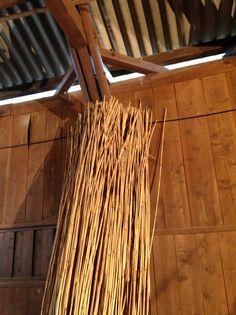 [1]これが近江八幡で刈ったヨシ!乾燥し