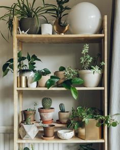 Like houseplants and interiors? We took a few pictures and shared some plant advice for the @nest_co_uk blog the link is in our profile #HaarkonHouse