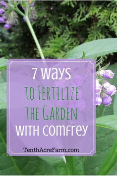 Comfrey is a powerhouse in the garden--attracting pollinators and beneficial insects, providing medicinal value, and enriching soil with nutrients. Here are seven ways comfrey can fertilize the soil for healthier and more abundant crops.:
