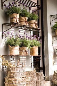 Lavanda je jedna od najčešće korištenih biljaka, cijenjena još od antičkih vremena za čišće, mirisnije i zdravije tijelo. Ime lavanda dolazi od latinskog glagola pranje. Lavanda raste spontano na cijelom Sredozemlju, ali vrlo lako se može uzgojiti i na vašim balkonima gdje će vam pružiti dekoraciju svojeg zadivljujućeg cvijeta i zamirisati svojim upornim i opojnim mirisom. Otkrit ćemo vam sve tajne i praktične savjete za uzgoj ove lijepe i mirisne biljke s puno korisnih svojstava. Može biti…