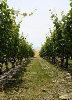 Winery -setting