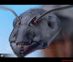 i1.wp.com www.sycmu.com wp-content uploads 2012 10 549698_257069054413638_695762475_n.jpg
